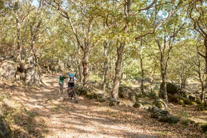 Transnorte Extremadura